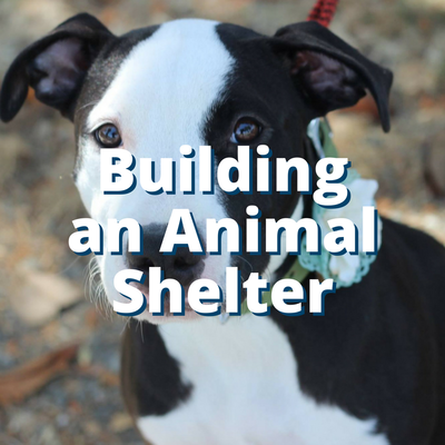 Building an Animal Shelter