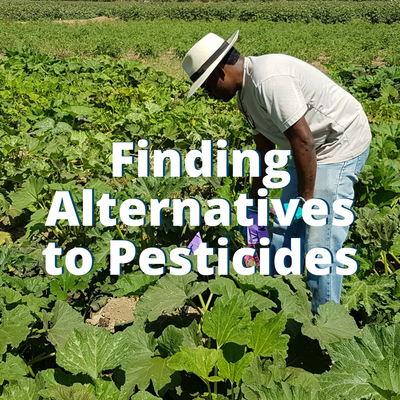 Finding Alternatives to Pesticides